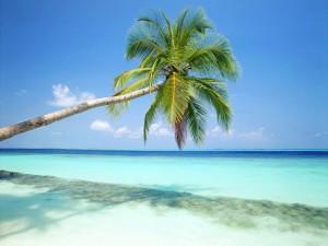 beach-wallpaper-hd-8-770761